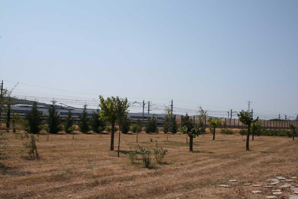 Replantació d'arbres al Municipi dels Monjos