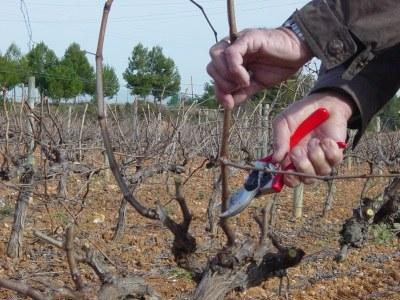formació en poda de la vinya