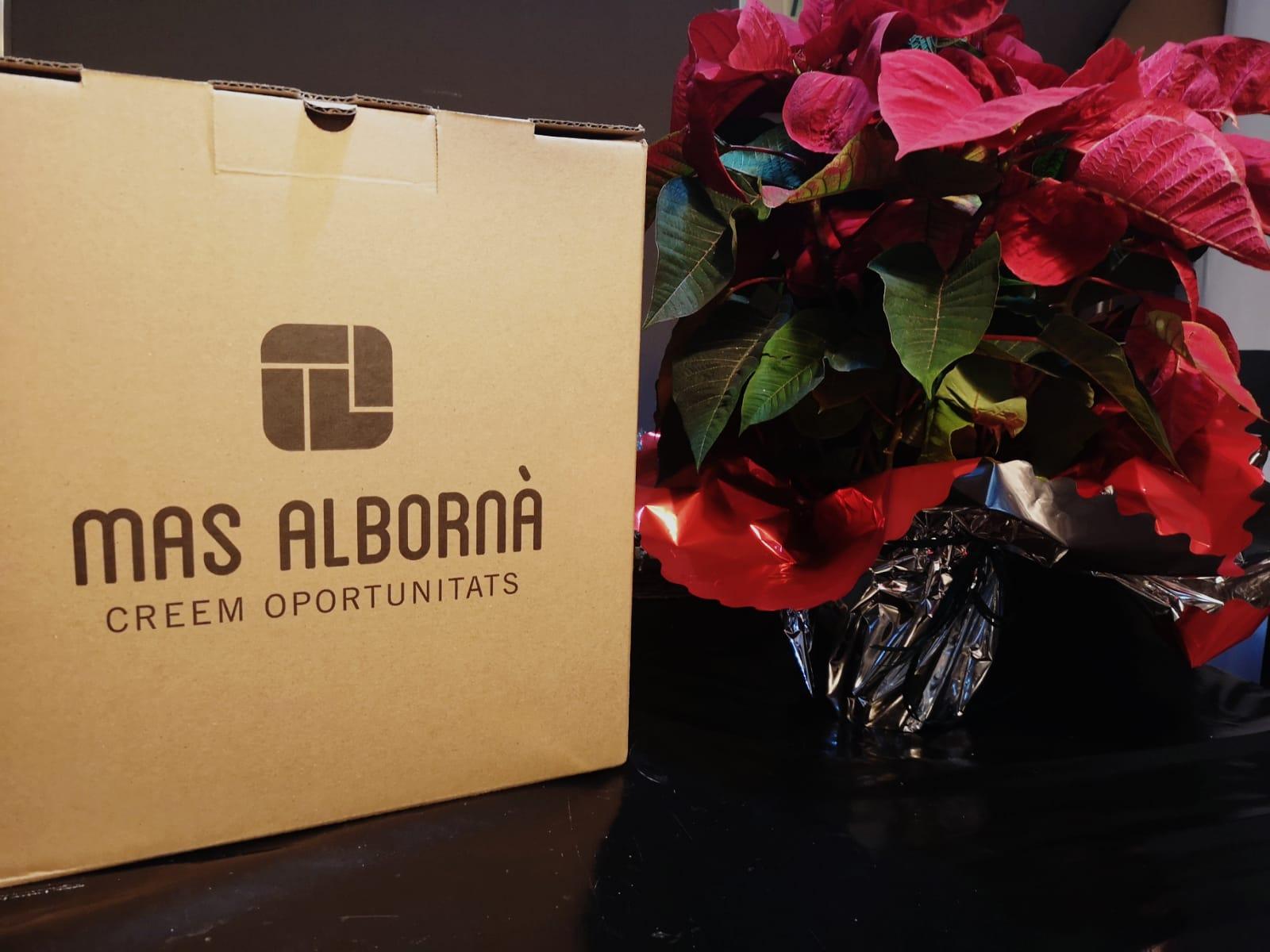 mas_alborna_lots_nadal